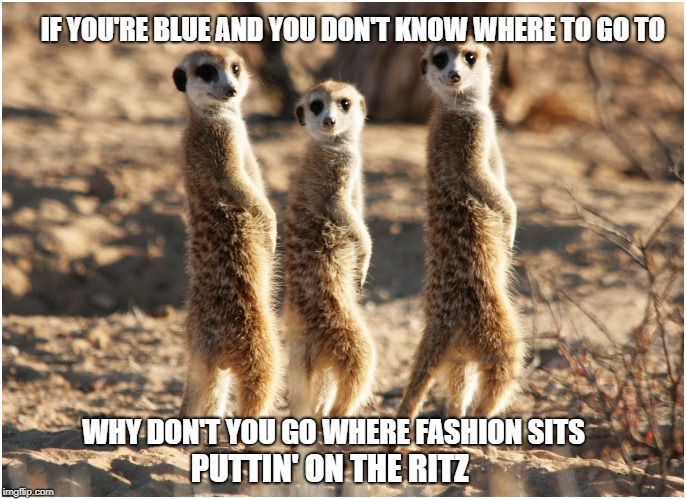 Meer Ritz | IF YOU'RE BLUE AND YOU DON'T KNOW WHERE TO GO TO WHY DON'T YOU GO WHERE FASHION SITS PUTTIN' ON THE RITZ | image tagged in meerkats,puttin' on the ritz | made w/ Imgflip meme maker