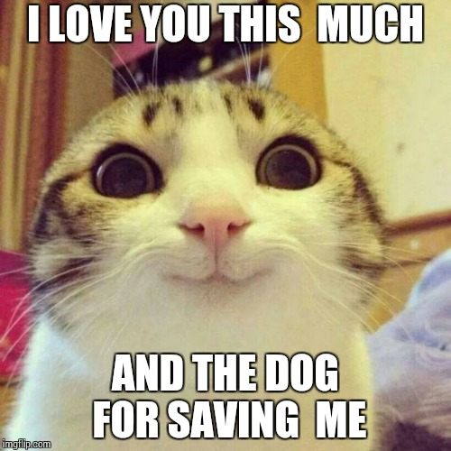 Smiling Cat Meme | I LOVE YOU THIS  MUCH AND THE DOG FOR SAVING  ME | image tagged in memes,smiling cat | made w/ Imgflip meme maker