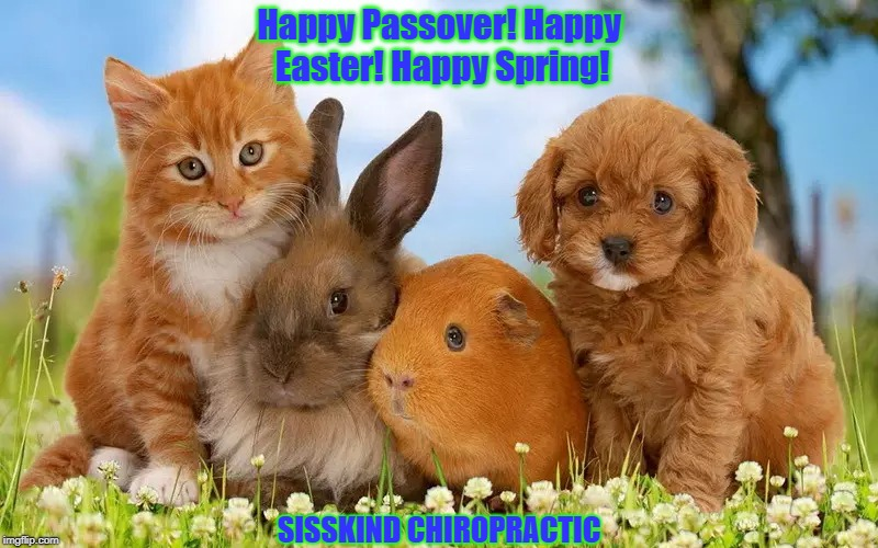 Happy Passover! Happy Easter! Happy Spring! | Happy Passover! Happy Easter! Happy Spring! SISSKIND CHIROPRACTIC | image tagged in chiropractor | made w/ Imgflip meme maker