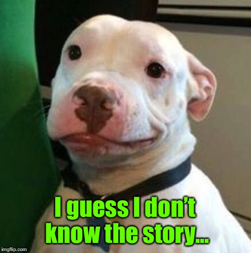 Awkward Dog | I guess I don't know the story... | image tagged in awkward dog | made w/ Imgflip meme maker