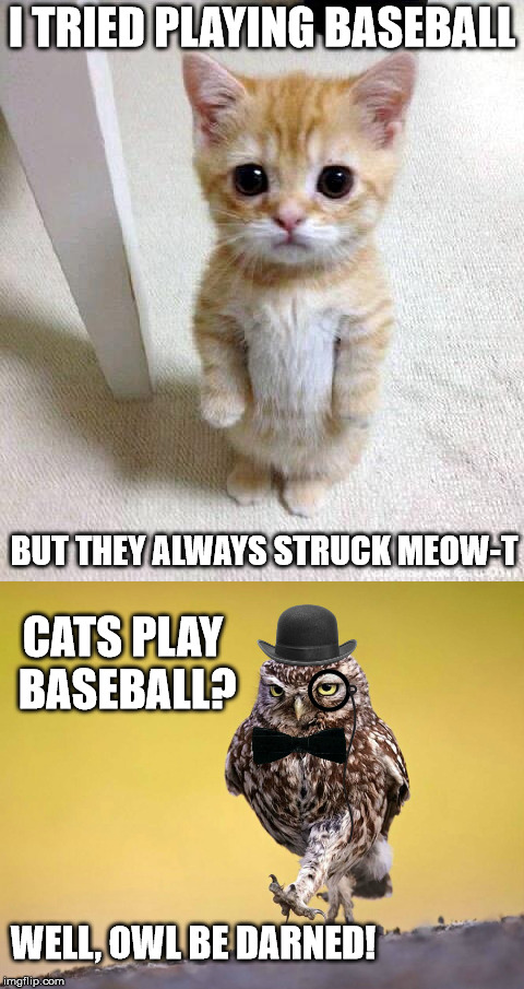 When the sandlot becomes the litter box | I TRIED PLAYING BASEBALL BUT THEY ALWAYS STRUCK MEOW-T CATS PLAY BASEBALL? WELL, OWL BE DARNED! | image tagged in kitten,owl,bad puns,baseball | made w/ Imgflip meme maker