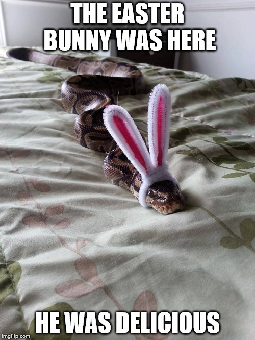 Your candy eggs may be late this year | THE EASTER BUNNY WAS HERE HE WAS DELICIOUS | image tagged in creepy easter bunny,snake,yummy | made w/ Imgflip meme maker