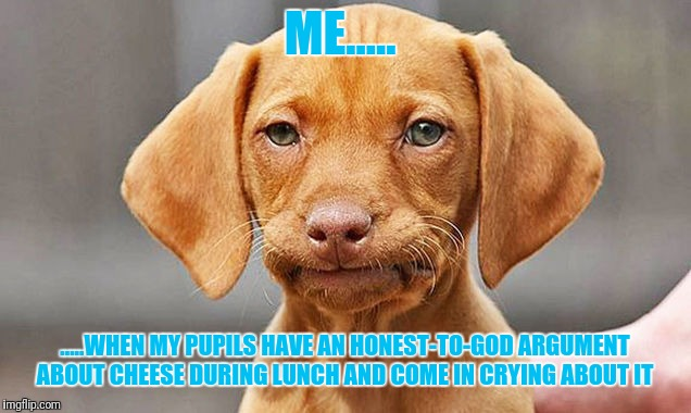 ME..... .....WHEN MY PUPILS HAVE AN HONEST-TO-GOD ARGUMENT ABOUT CHEESE DURING LUNCH AND COME IN CRYING ABOUT IT | image tagged in fed up dog | made w/ Imgflip meme maker