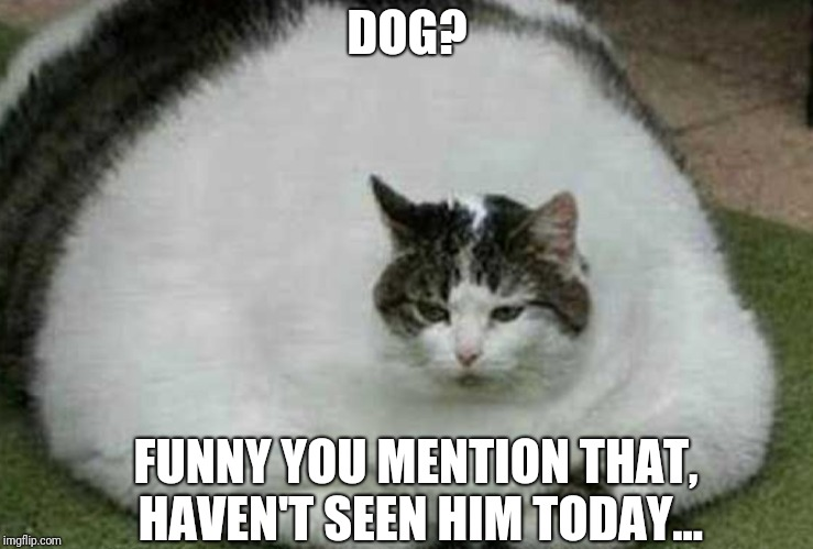 Dog? | DOG? FUNNY YOU MENTION THAT, HAVEN'T SEEN HIM TODAY... | image tagged in fat cat,cats,doge | made w/ Imgflip meme maker