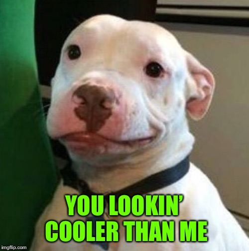 Awkward Dog | YOU LOOKIN' COOLER THAN ME | image tagged in awkward dog | made w/ Imgflip meme maker