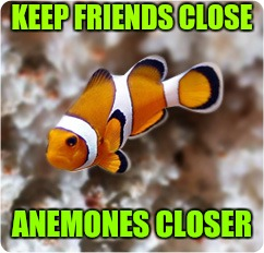 KEEP FRIENDS CLOSE ANEMONES CLOSER | image tagged in ocellaris clownfish nemo | made w/ Imgflip meme maker