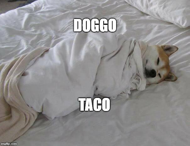 Doggo Taco | DOGGO TACO | image tagged in doggo,taco,doge,tacos,bed,cute | made w/ Imgflip meme maker