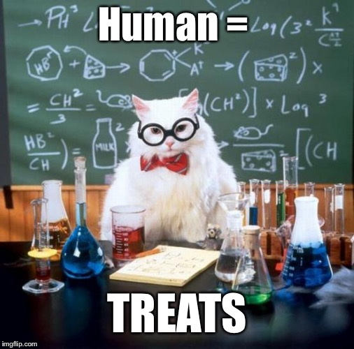 Chemistry Cat Meme | Human = TREATS | image tagged in memes,chemistry cat | made w/ Imgflip meme maker