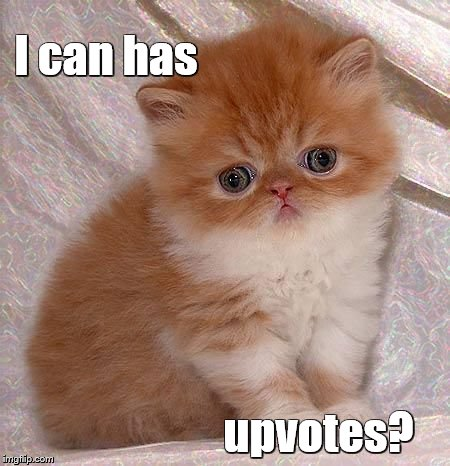 Sad Persian Kitten | I can has upvotes? | image tagged in sad kitty | made w/ Imgflip meme maker