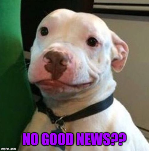 Awkward Dog | NO GOOD NEWS?? | image tagged in awkward dog | made w/ Imgflip meme maker