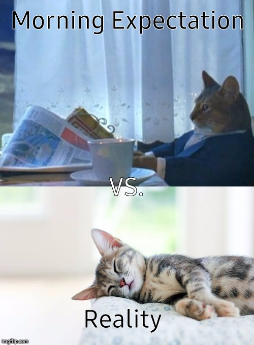 Cat |  Morning Expectation; VS. Reality | image tagged in sleeping,sleeping cat,reality,expectation vs reality,expectation | made w/ Imgflip meme maker