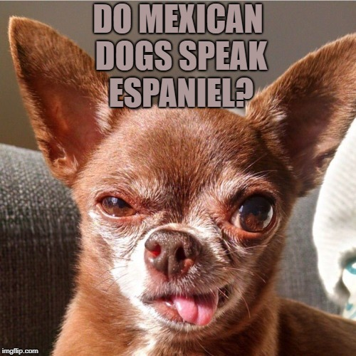 DO MEXICAN DOGS SPEAK ESPANIEL? | image tagged in chihuahua monday,dogs,funny,memes,mexican,funny memes | made w/ Imgflip meme maker