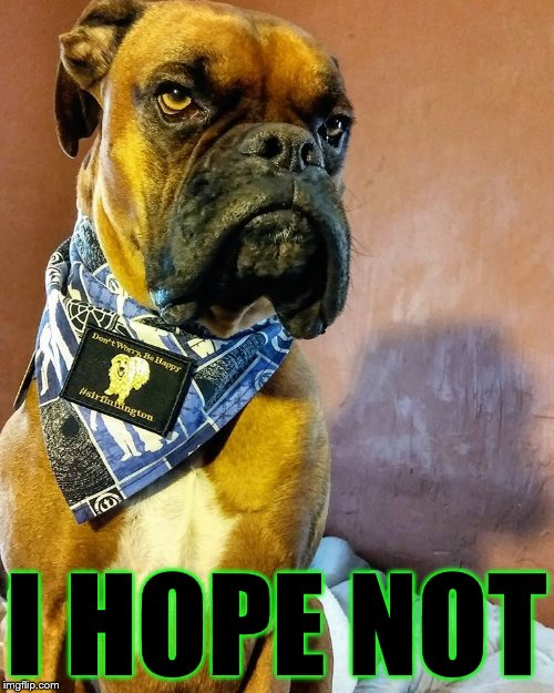 Grumpy Dog | I HOPE NOT | image tagged in grumpy dog | made w/ Imgflip meme maker