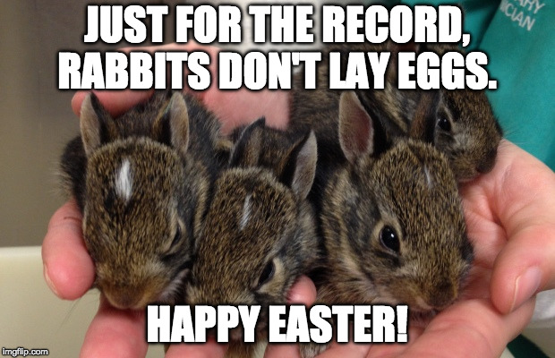 Eater Bunnies | JUST FOR THE RECORD, RABBITS DON'T LAY EGGS. HAPPY EASTER! | image tagged in easter,easter eggs,eggs | made w/ Imgflip meme maker