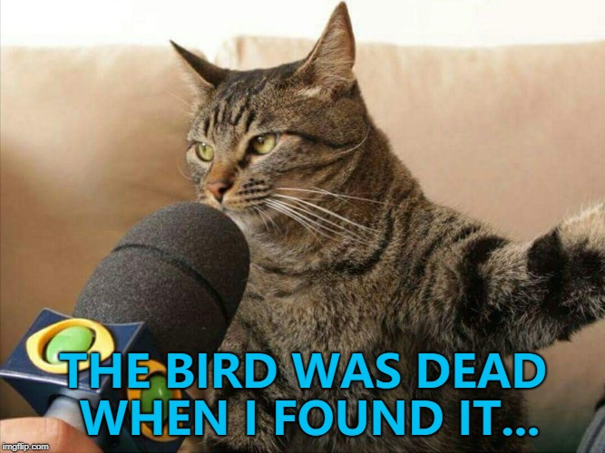 Tell it to the judge... :) | THE BIRD WAS DEAD WHEN I FOUND IT... | image tagged in cat giving an interview,memes,animals,cats | made w/ Imgflip meme maker