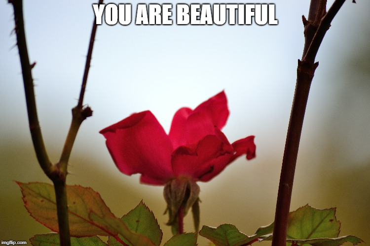 you are beautiful | YOU ARE BEAUTIFUL | image tagged in beauty,beautiful | made w/ Imgflip meme maker