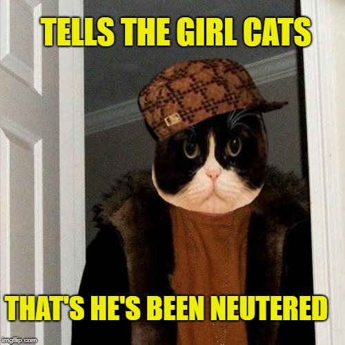 Scumbag Cat 2 | TELLS THE GIRL CATS THAT'S HE'S BEEN NEUTERED | image tagged in funny memes,cat,scumbag steve,scumbag cat | made w/ Imgflip meme maker