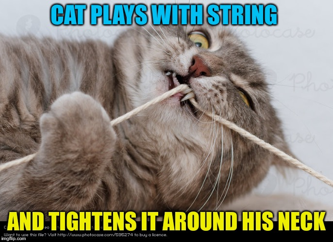 CAT PLAYS WITH STRING AND TIGHTENS IT AROUND HIS NECK | made w/ Imgflip meme maker