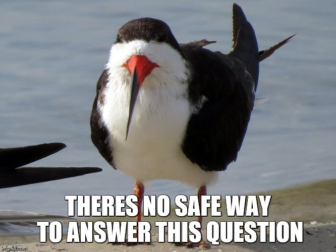 Even Less Popular Opinion Bird | THERES NO SAFE WAY TO ANSWER THIS QUESTION | image tagged in even less popular opinion bird | made w/ Imgflip meme maker
