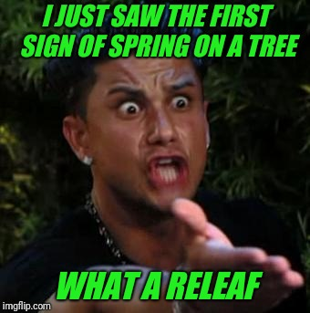Happy Easter everyone! | I JUST SAW THE FIRST SIGN OF SPRING ON A TREE WHAT A RELEAF | image tagged in bad pun,spring,tree | made w/ Imgflip meme maker