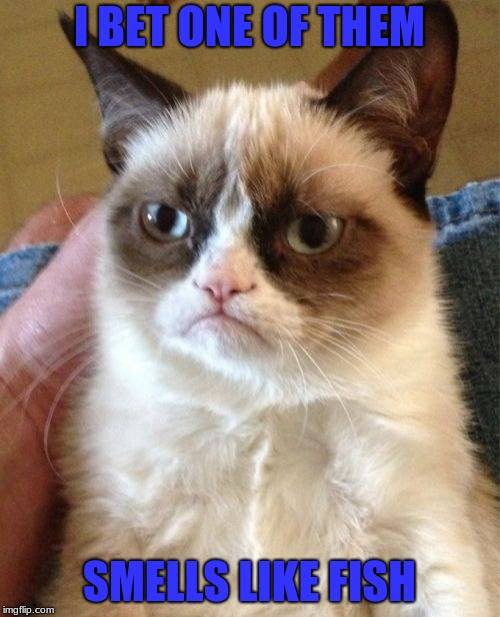 Grumpy Cat Meme | I BET ONE OF THEM SMELLS LIKE FISH | image tagged in memes,grumpy cat | made w/ Imgflip meme maker
