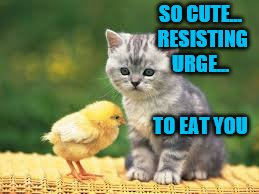 Get your chicken memes and jokes ready for Chicken Week, April 2-8, a JBmemegeek & giveuahint event! | SO CUTE... RESISTING URGE... TO EAT YOU | image tagged in memes,chicken week,theme week stream,jbmemegeek,giveuahint | made w/ Imgflip meme maker