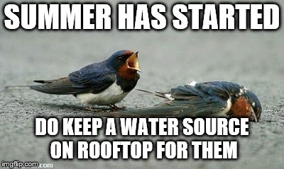 birds saving | SUMMER HAS STARTED DO KEEP A WATER SOURCE ON ROOFTOP FOR THEM | image tagged in save the earth | made w/ Imgflip meme maker