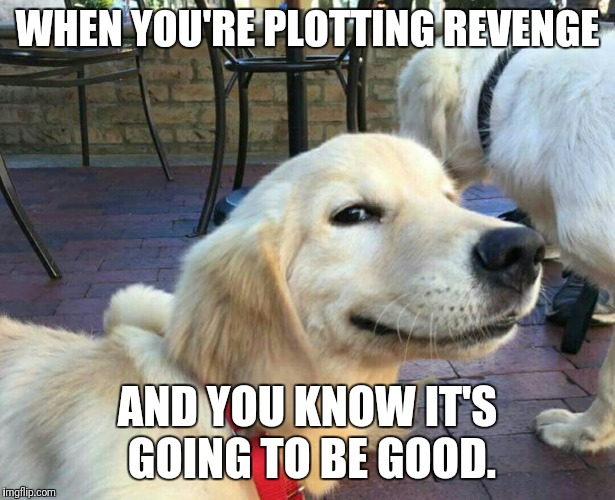WHEN YOU'RE PLOTTING REVENGE AND YOU KNOW IT'S GOING TO BE GOOD. | image tagged in good boy dog | made w/ Imgflip meme maker