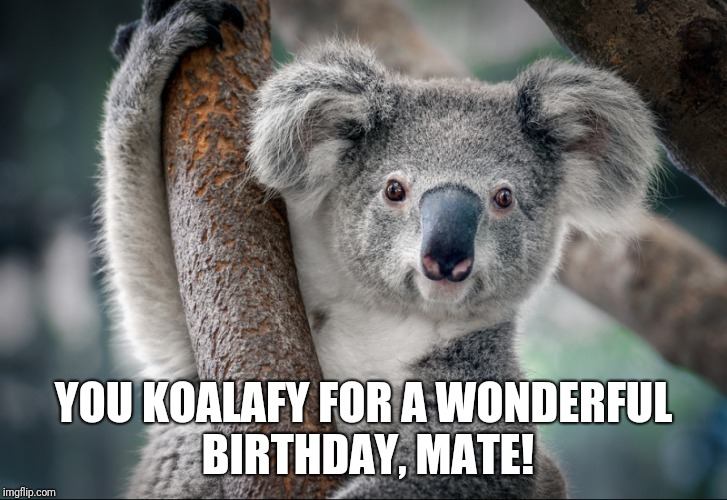 Koala birthday | YOU KOALAFY FOR A WONDERFUL BIRTHDAY, MATE! | image tagged in koala,birthday,mate | made w/ Imgflip meme maker