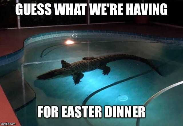 Alligator in pool | GUESS WHAT WE'RE HAVING FOR EASTER DINNER | image tagged in memes,funny memes,alligator,pool,florida,meanwhile in florida | made w/ Imgflip meme maker