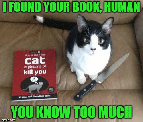 Cat Conditioner Human