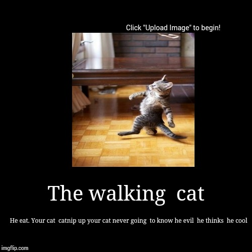 The walking  cat | He eat. Your cat  catnip up your cat never going  to know he evil  he thinks  he cool | image tagged in funny,demotivationals,cats,grumpy cat,nyan cat | made w/ Imgflip demotivational maker