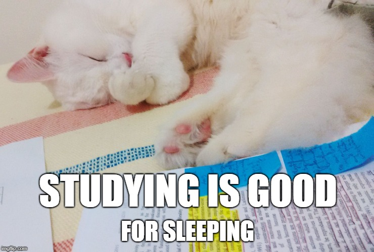 STUDYING IS GOOD FOR SLEEPING | image tagged in studycat,cat,study,sleep,sleeping | made w/ Imgflip meme maker