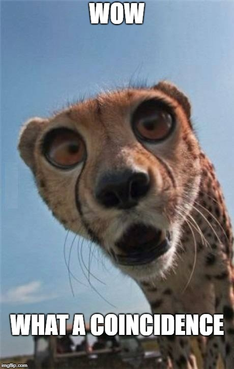Incredulous cheetah | WOW WHAT A COINCIDENCE | image tagged in incredulous cheetah | made w/ Imgflip meme maker