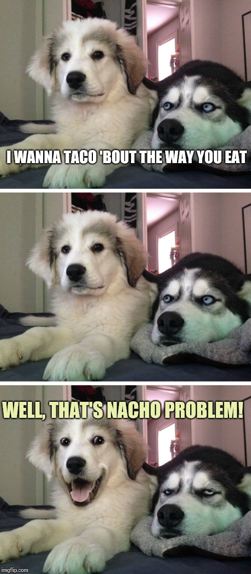 Bad pun dogs | I WANNA TACO 'BOUT THE WAY YOU EAT WELL, THAT'S NACHO PROBLEM! | image tagged in bad pun dogs | made w/ Imgflip meme maker