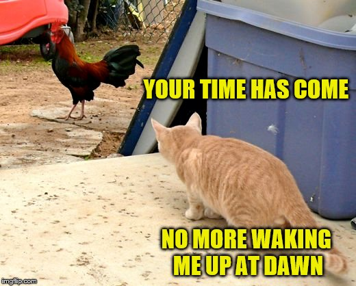 YOUR TIME HAS COME NO MORE WAKING ME UP AT DAWN | made w/ Imgflip meme maker