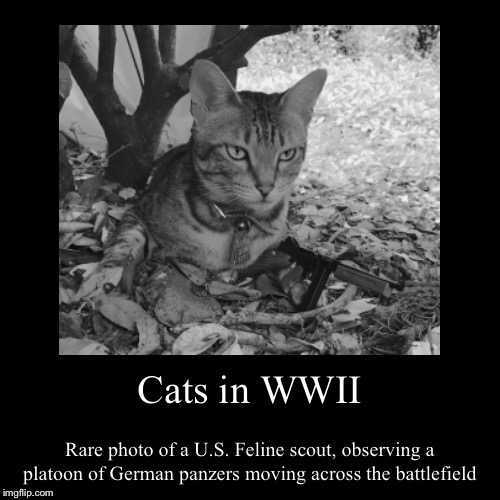 Cats in WWII | Rare photo of a U.S. Feline scout, observing a platoon of German panzers moving across the battlefield | image tagged in funny,demotivationals | made w/ Imgflip demotivational maker