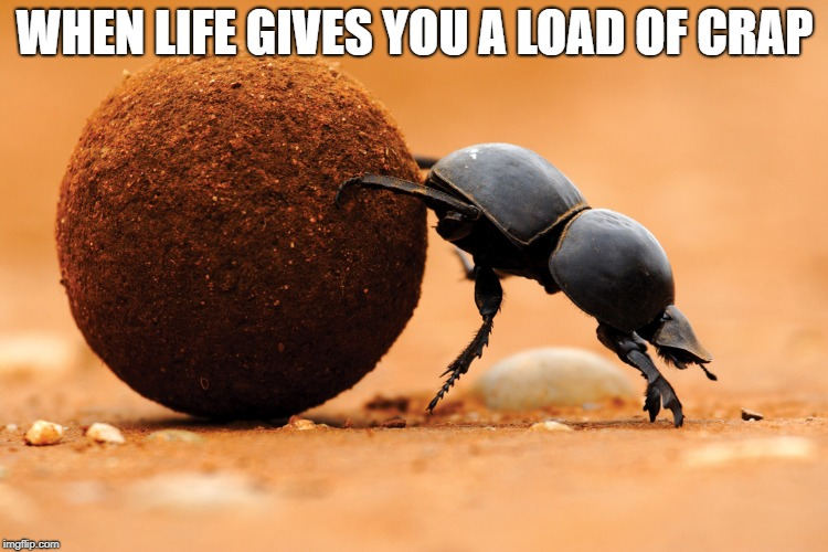 WHEN LIFE GIVES YOU A LOAD OF CRAP | image tagged in dung beetle | made w/ Imgflip meme maker