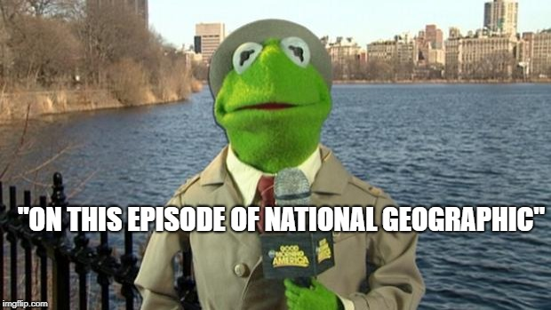 "Kermit News Report | ""ON THIS EPISODE OF NATIONAL GEOGRAPHIC"" 