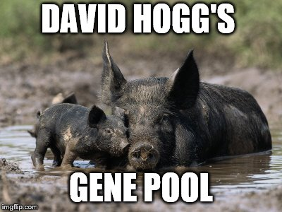 DAVID HOGG'S GENE POOL | image tagged in pigs | made w/ Imgflip meme maker