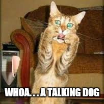 WHOA. . . A TALKING DOG | made w/ Imgflip meme maker