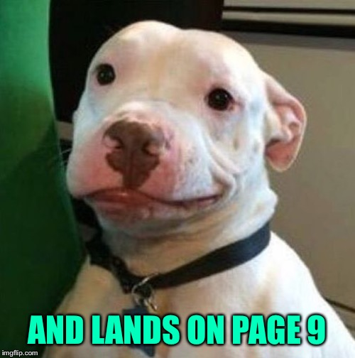 Awkward Dog | AND LANDS ON PAGE 9 | image tagged in awkward dog | made w/ Imgflip meme maker