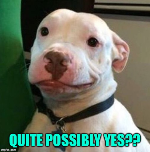 Awkward Dog | QUITE POSSIBLY YES?? | image tagged in awkward dog | made w/ Imgflip meme maker