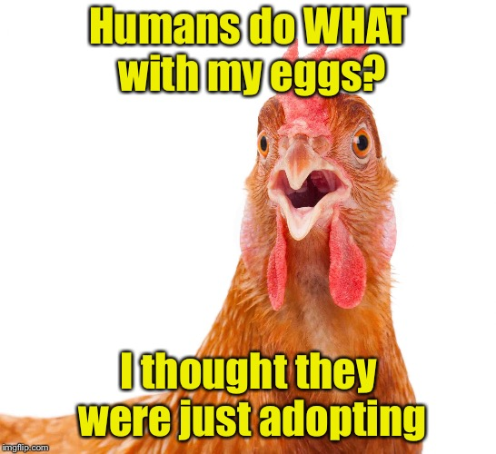 Chicken week  | Humans do WHAT with my eggs? I thought they were just adopting | image tagged in memes,chicken week,eggs | made w/ Imgflip meme maker