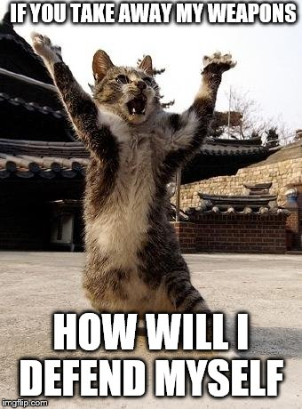 kung fu kitten | IF YOU TAKE AWAY MY WEAPONS HOW WILL I DEFEND MYSELF | image tagged in kung fu kitten | made w/ Imgflip meme maker