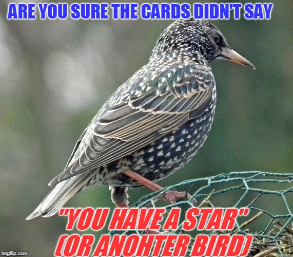 "ARE YOU SURE THE CARDS DIDN'T SAY ""YOU HAVE A STAR"" (OR ANOHTER BIRD) 