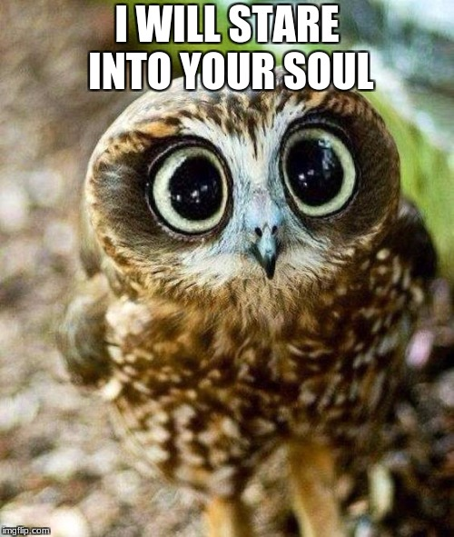This Owl Bruh... | I WILL STARE INTO YOUR SOUL | image tagged in owl,death stare,soul | made w/ Imgflip meme maker