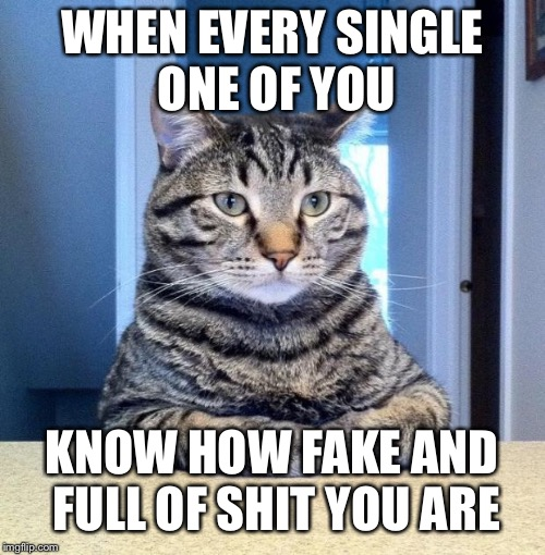 WHEN EVERY SINGLE ONE OF YOU KNOW HOW FAKE AND FULL OF SHIT YOU ARE | image tagged in serious cat | made w/ Imgflip meme maker