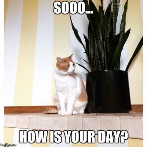 SOOO... HOW IS YOUR DAY? | image tagged in danielle yuthas cat meme | made w/ Imgflip meme maker