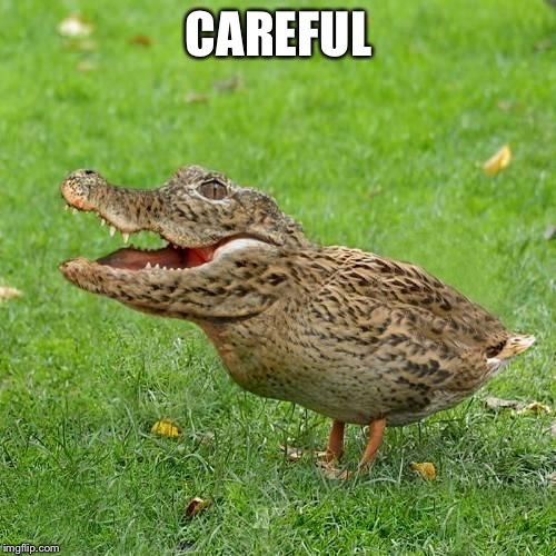 Crocoduck | CAREFUL | image tagged in crocoduck | made w/ Imgflip meme maker